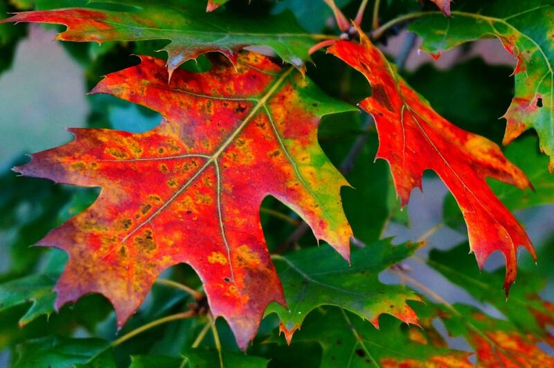 ITA - Autumn colors in Formigine, Modena -DSC09740sm