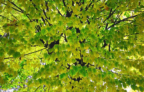 ITA- Autumn leaves IMG_0784