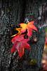 ITA- Autumn colour IMG_0500
