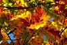 ITA- Foliage in Formigine-DSC09936sm