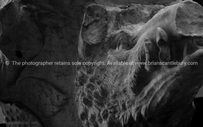 Pigs head, artifact in the Colosseum, Rome. Italian images.