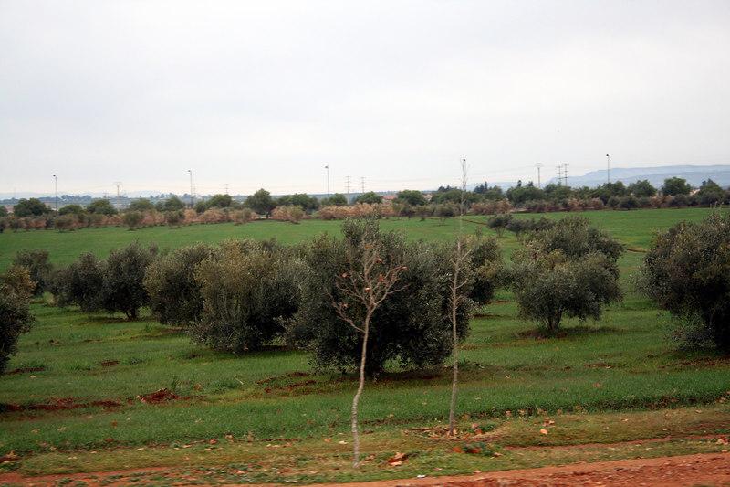 IMG_2607 Fez to Ifrane