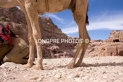 PETRA view under camel belly.