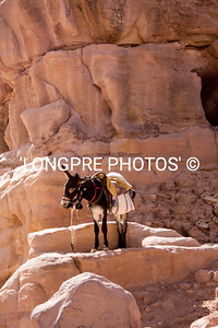 Precious DONKEY waiting at PETRA.