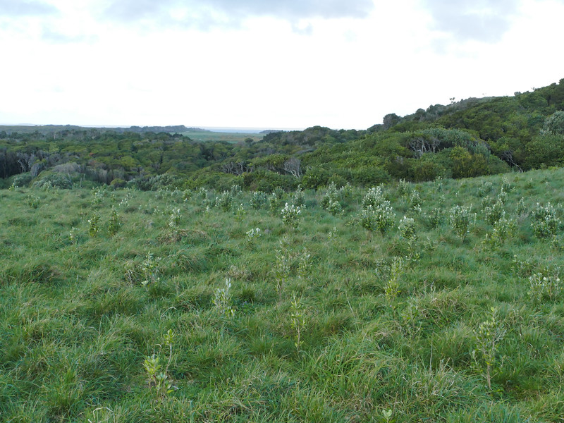 Planting at Henga Reserve