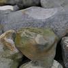 Fossil sponge