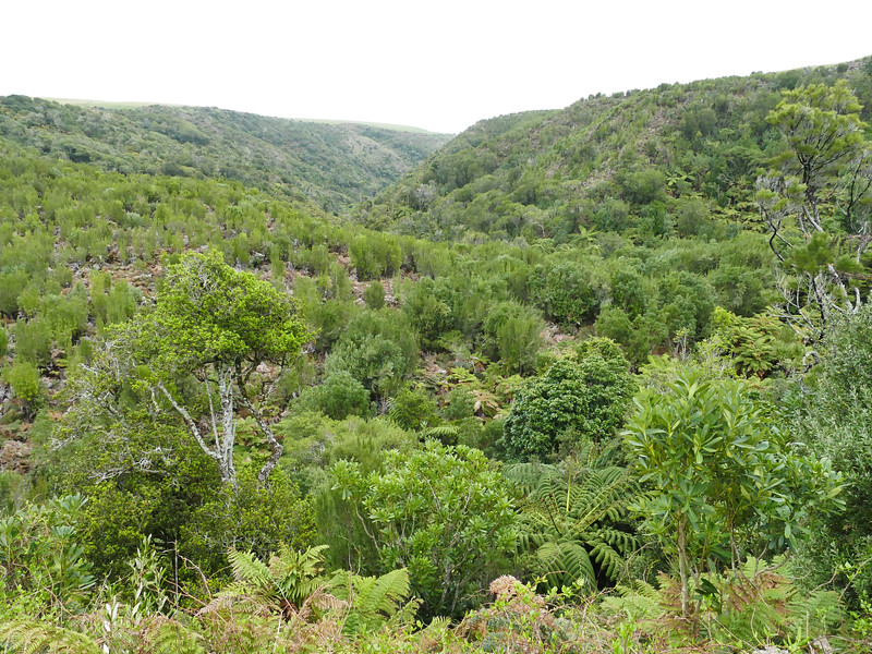 View of Parea Reserve