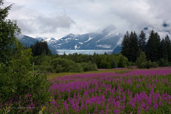 Mendenhall Glacier from the valley