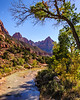 The Virgin River in Zion National lPark