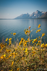 Tetons across Jackson lake