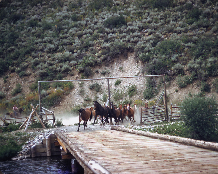In the morning - bring the horses in from the field.