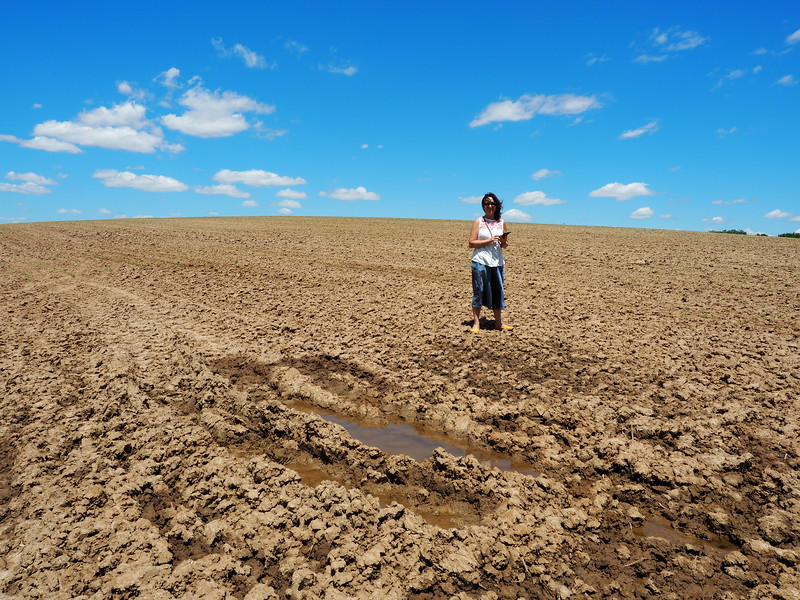Water bubbling up in the field.