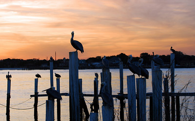 Every pelican a post and every post a pelican