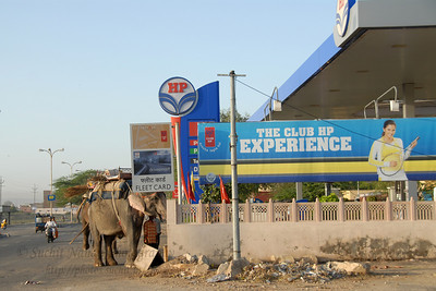 On the way to the Kanak Vrindavan Garden, a humorous site of an Elephant getting a re-fill at the HP Petrol Pump (Gas Station).