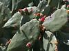Some local cactus