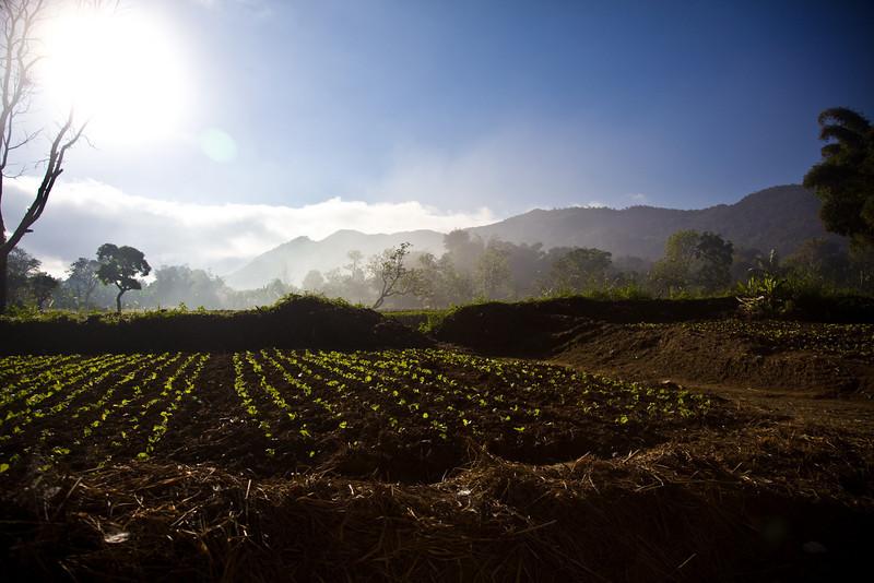 Jamaica2011-5017