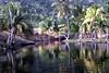 Gut River, Jamaica.
