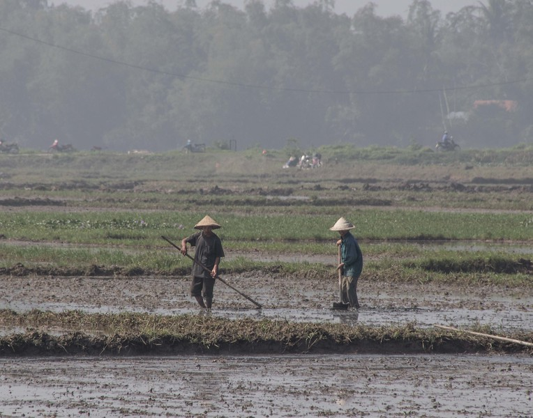 Cultivating rice, near Da Nang