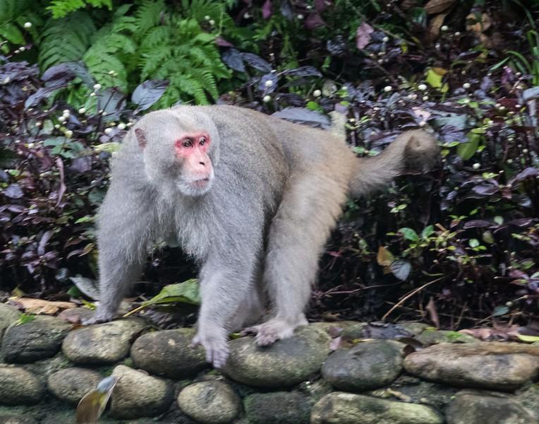 Monkey Mountain, Da Nang