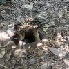 Trapdoor at Cu Chi Tunnels