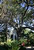 0019 Live Oak in Biloxi