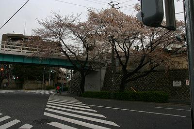 Sakura falls...