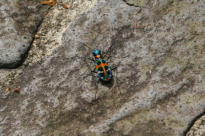 A colourful bug...