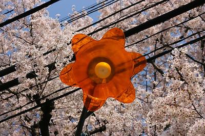 Japan 08