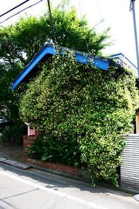Plants Vs. House, Pt. XI