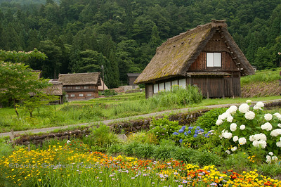 Flowers in the foreground lead to a road, which leads to a house at the World Heritage site Shirakawa, Japan.