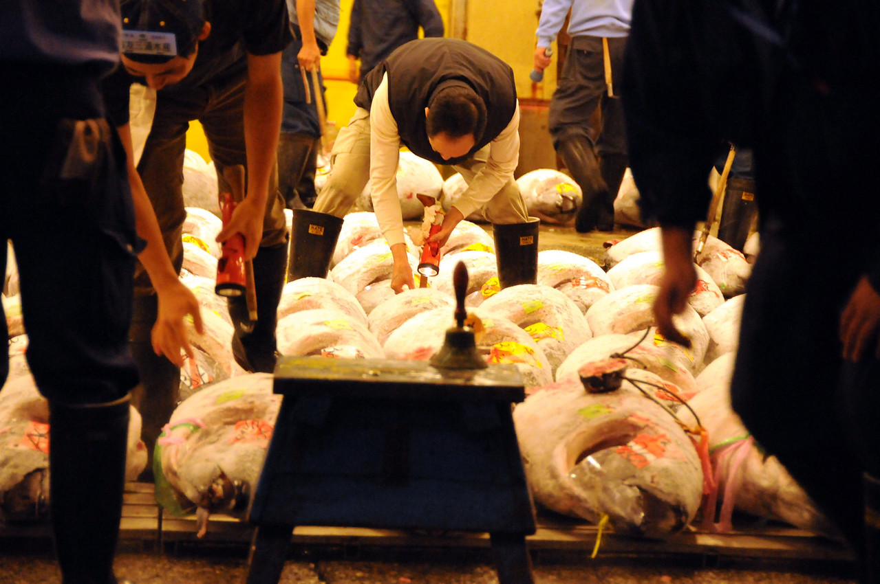 Tuna carefully inspected at Tsukiji fish market