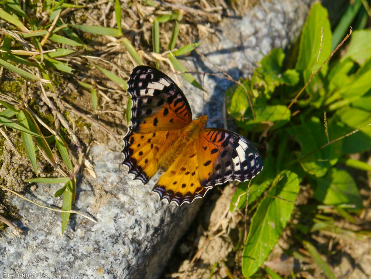 Butterfly Near Hiroshima-jo