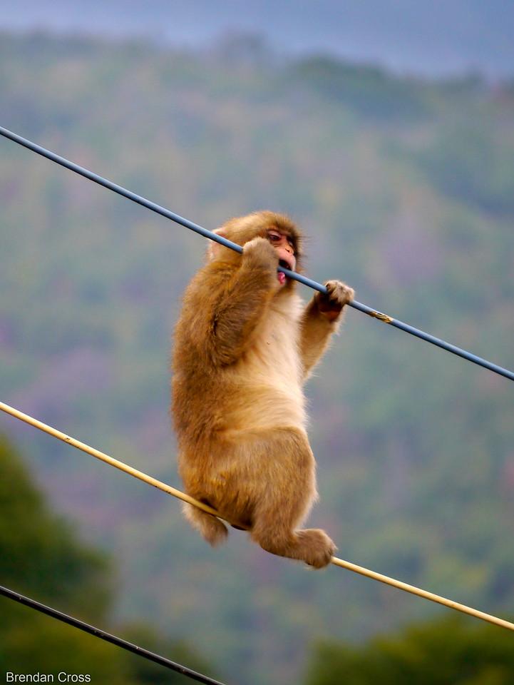Monkey Park Iwatayama, Arashiyama