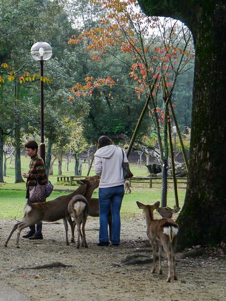 Hungry Deer, Nara Koen
