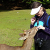 Feeding the deer, Nara Park, Nara