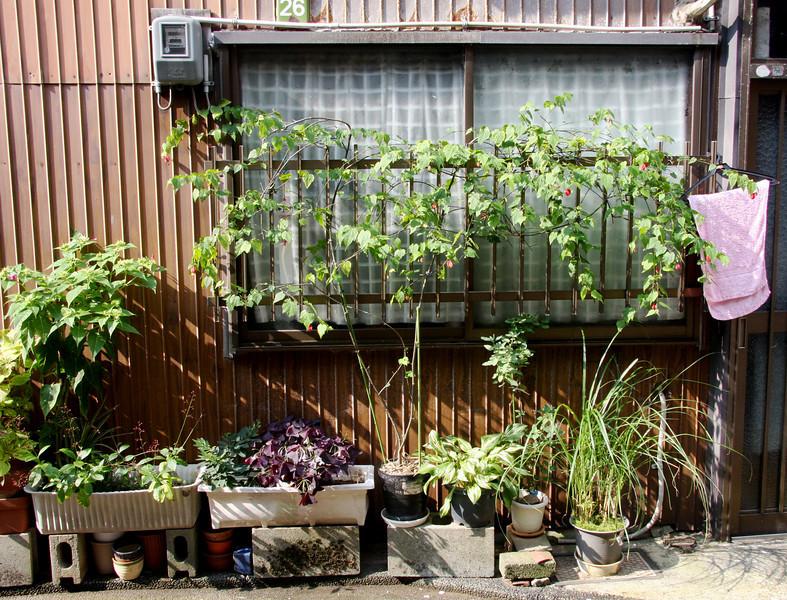 Window plantings, Higashi Chayagai District, Kanazawa