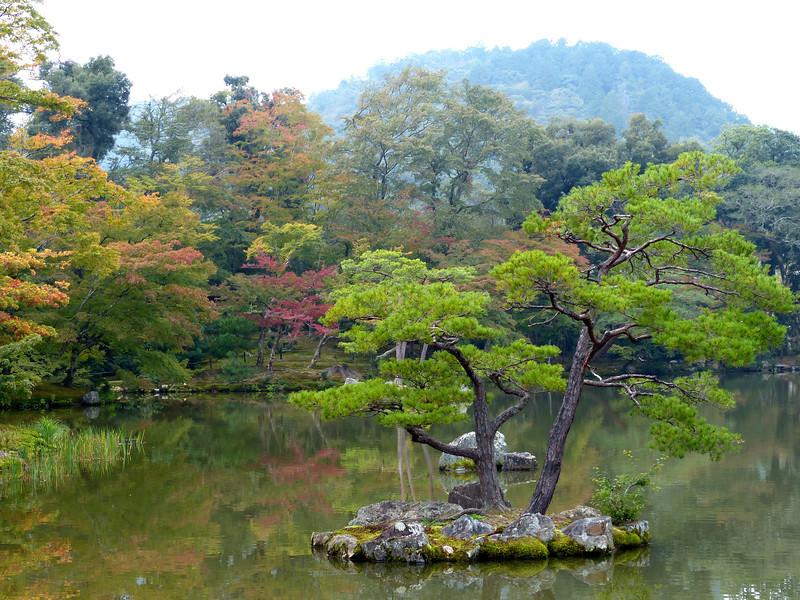 Foliage, Kinkakuji Temple (Golden Pavilion), Kyoto