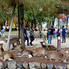 Deer, Nara Park, Nara