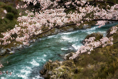 Iya Valley, Island of Shikoku