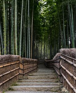 Arashiyama Bamboo F0rest