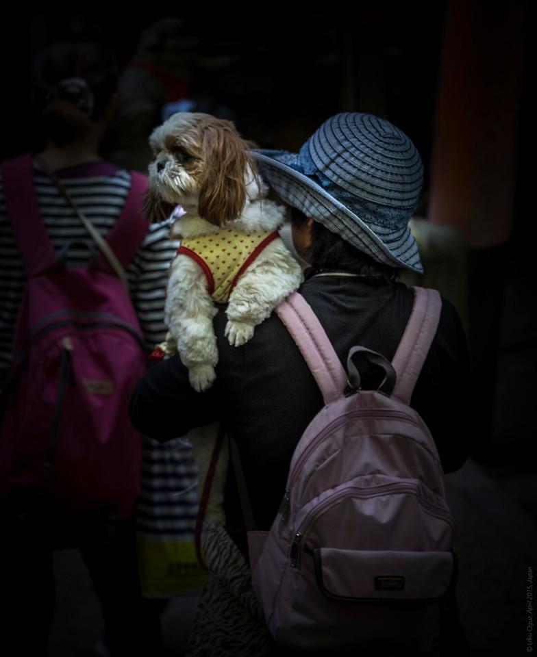 Shrine Visitor Puppy