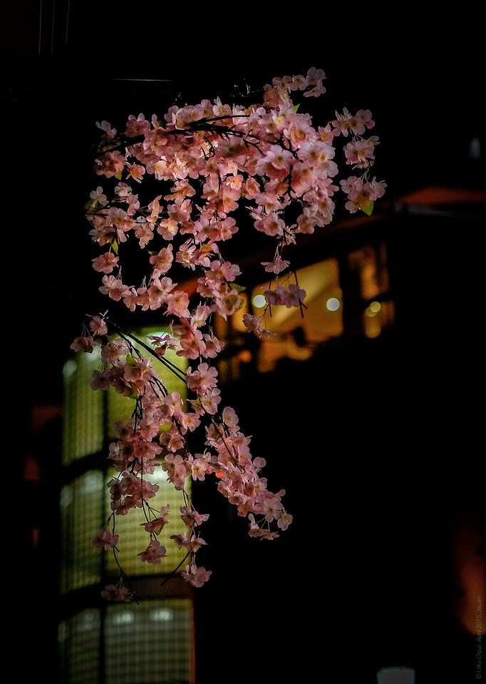 Sakura Viewing By Night