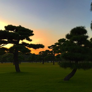 Trees outside of Imperial Palace, Tokyo
