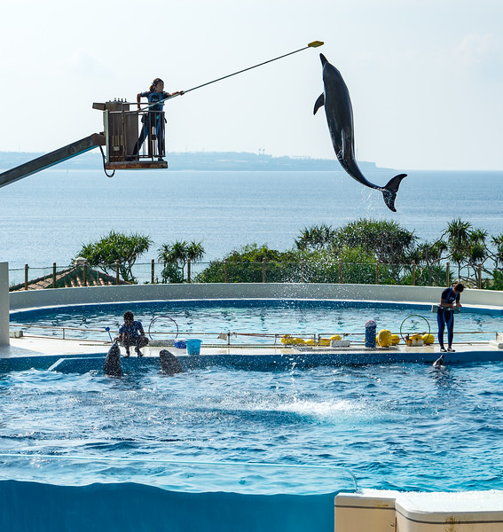 That dolphin could jump impressively high!