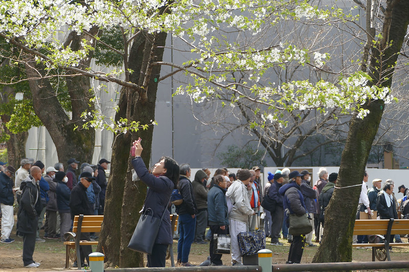 Queue for charity meal at Ueno Park.