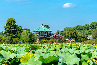Benten-do Temple across the pond