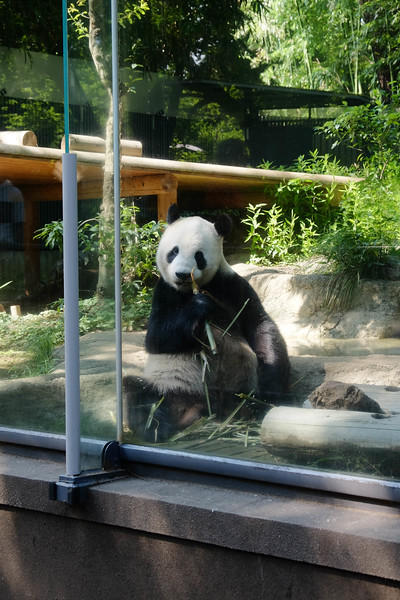 US$6 to get into Ueno Zoo.   30 steps from the front gate is the panda enclosure.   No lines, no crowds...   Great little zoo