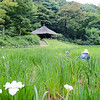 Iris fields at Meiji Shrine Gardens