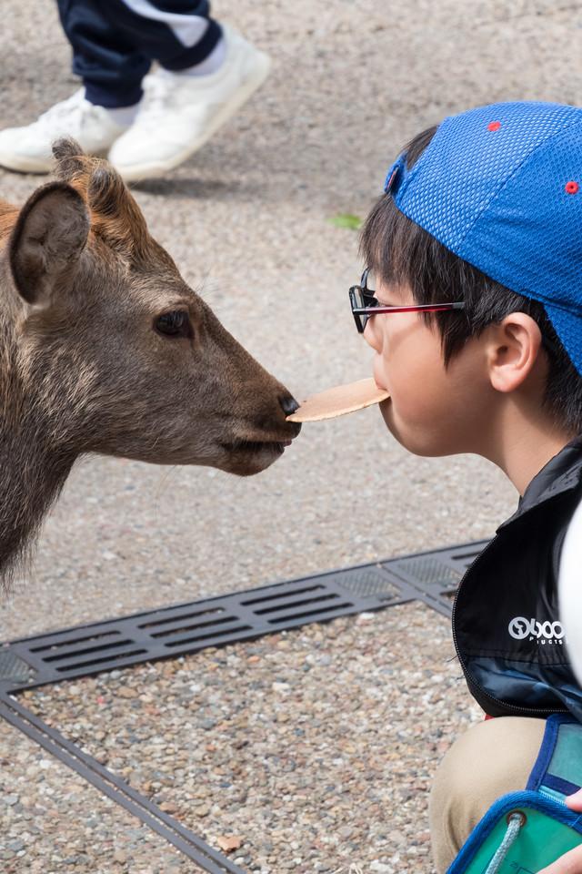 Feed the deer