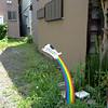 Yes!  Go rainbow dog, go!